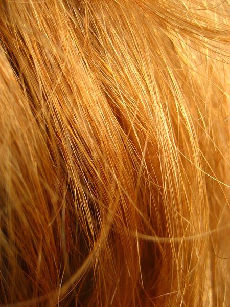 450px-Redhead_close_up