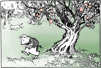 69895_pig-tree_md copy